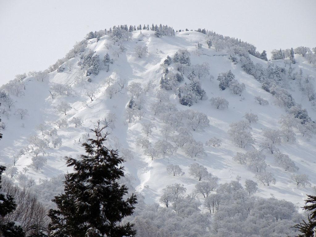 横前倉山の北東斜面