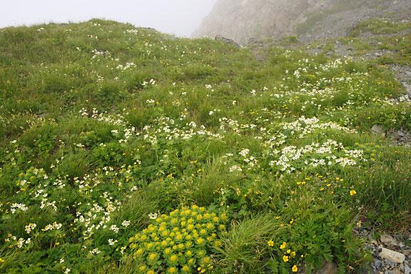 岩場の下にあるささやかなお花畑