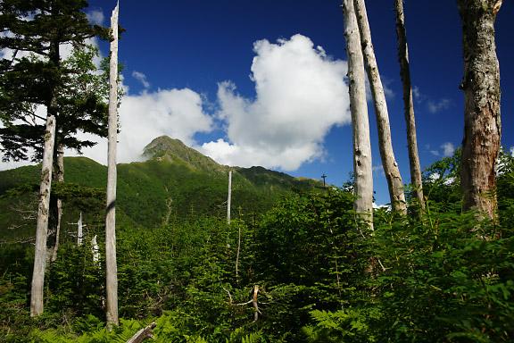 倒木帯から塩見岳を望む