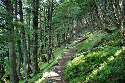 静かな樹林帯を登る