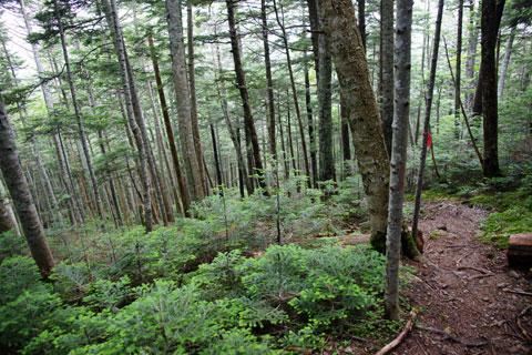 樹林帯を下る