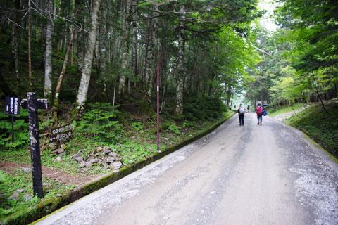 林道を歩けば北沢峠までもうすぐ