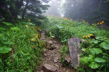 本谷山の手前にはお花畑が点在