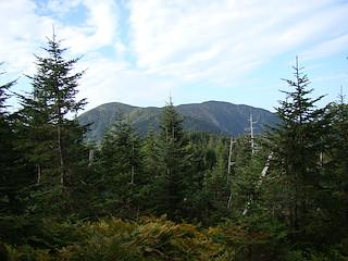 樹間から望むイザルヶ岳と光岳