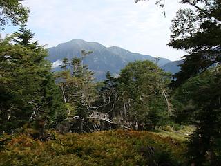 途中の見晴らしが良いところでは聖岳が見えた