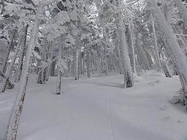 樹林帯を滑り降りた