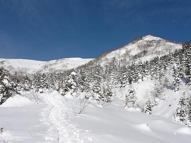 青空の下、林道をテクテク