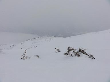 ガスがかかった白馬乗鞍岳の山頂