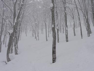 滑りやすい疎林の斜面
