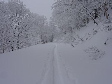 林道にはトレースばっちり